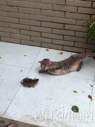 动物场景画猫和老鼠图片大全