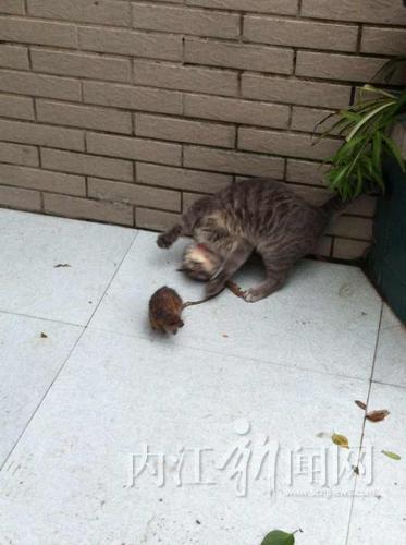 猫和老鼠 - 内江新闻网