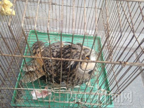然叫卖野生保护动物 部门 已构成违法行为