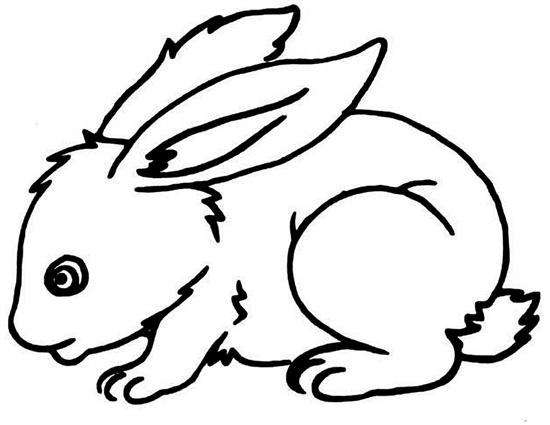 打兔儿 咋会比去年贵了