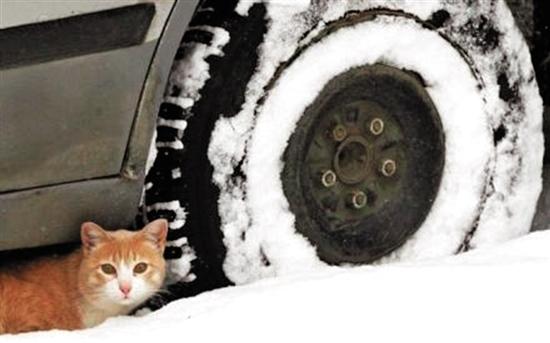 冬天来了,注意小动物藏车底