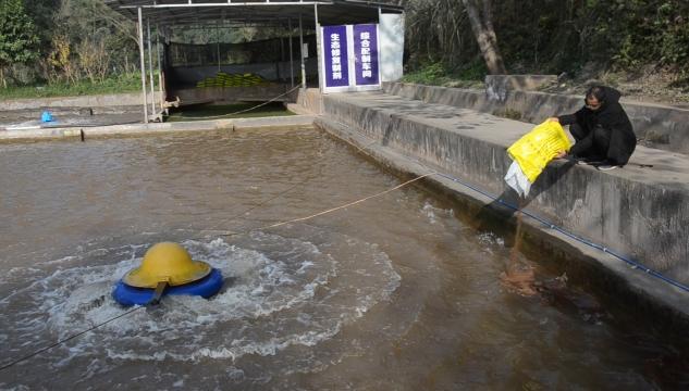 球溪河(资中段)探索一条河道生态修复治理之路