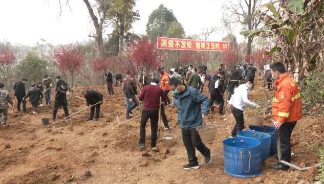"""隆昌市开展""""3.12""""义务植树活动"""