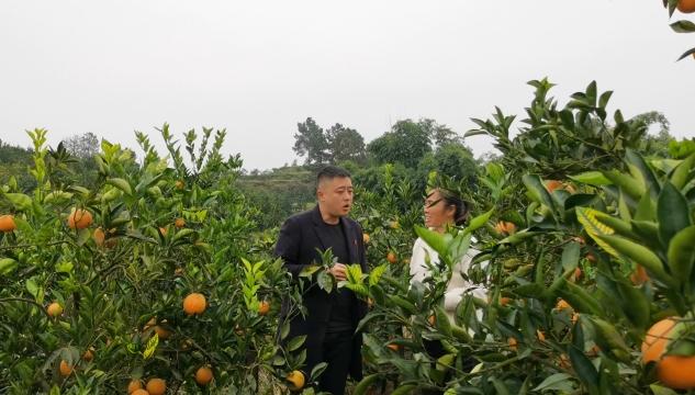 """脱贫户王翠芳:六亩果园""""种""""出好日子"""
